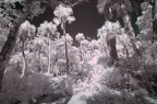 Florida Institute of Technology park in IR